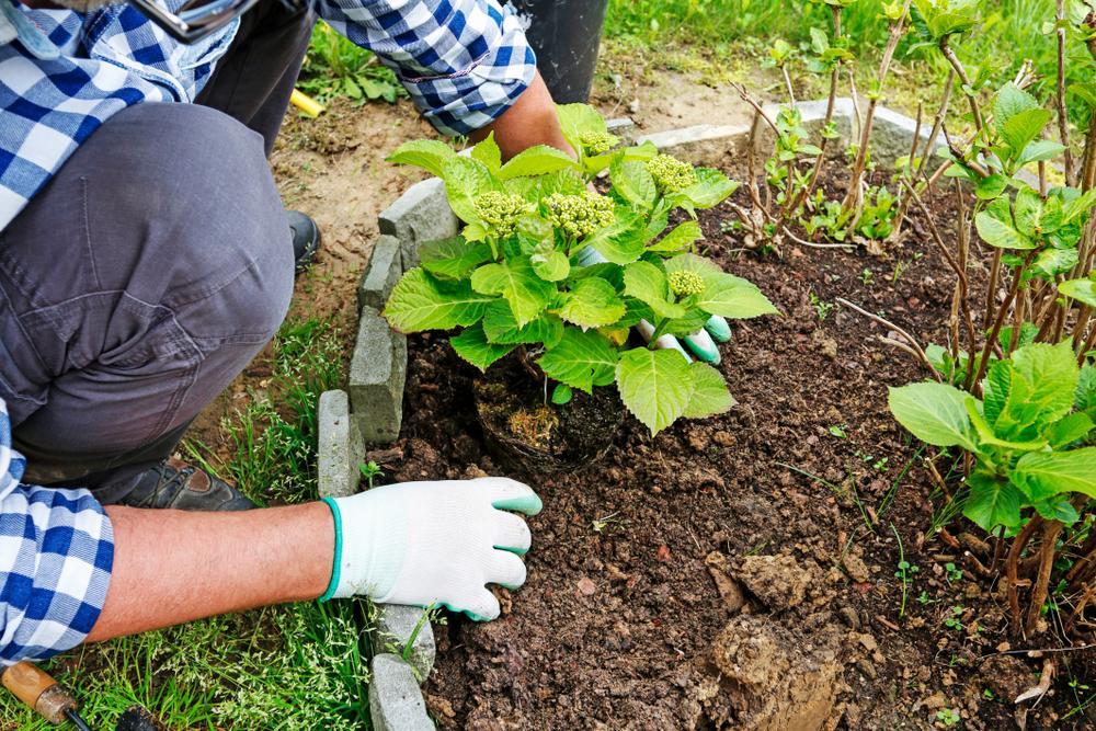 ¿Cómo ahorrar energía en el jardín?