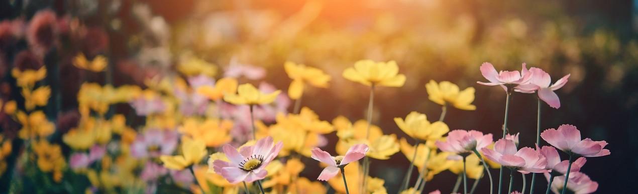 cuida tu jardin y disfruta del el